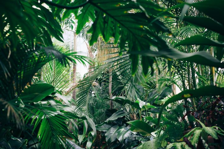 Environnement : biologique, naturel, consommation – Les produits desoin